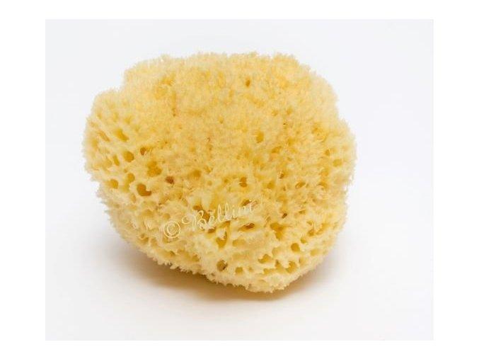 jadeska houba